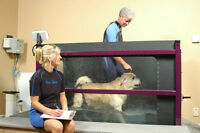 K-9 Rehab/Essex Animal Hosp - Dr. Jan Board Certified Specialist