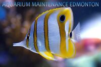 Aquarium Maintenance