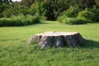 Professional Tree & Stump Removal