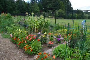 LOOKING FOR A PLOT/YARD TO GROW VEGETABLES