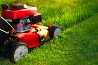 No Mow Mess Lawn Maintenance