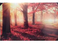 Stunning Sunshine through Trees high quality canvas - glows in the dark