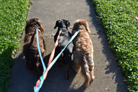 Wonderpets Dog Walking & Pet Sitting AVAILABLE LABOR DAY WEEKEND