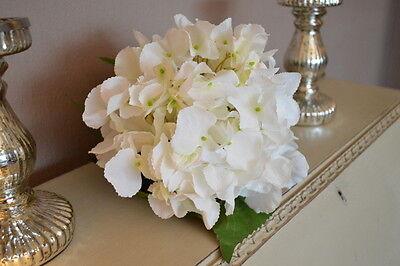 Ean 5037954100062 Extra Large White Hydrangeas Individual