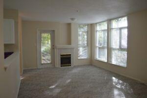 super quiet , safe and clean place bedroom $900 Maple Ridge