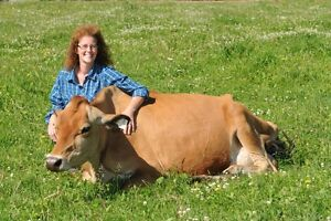 EXCELLENT...LACTATING....BRED JERSEY COW!!!!!!!
