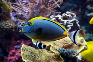 Saltwater Fish New Arrival
