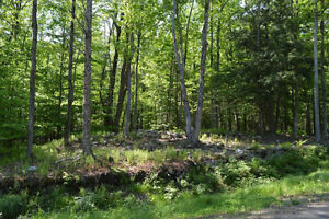 5 Acre Lots for Sale in Beautiful Brome Lake area of Townships West Island Greater Montréal image 8