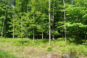 5 Acre Lots for Sale in Beautiful Brome Lake area of Townships West Island Greater Montréal image 2