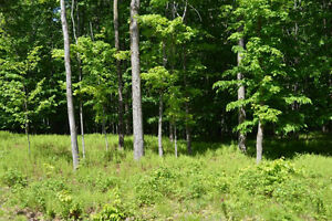 5 Acre Lots for Sale in Beautiful Brome Lake area of Townships West Island Greater Montréal image 3