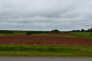 49 Acre Lot in Eastern PEI