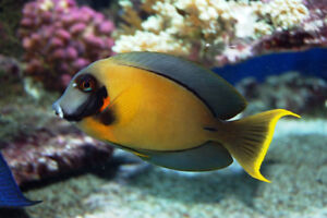 Marine Tropical Fish New Arrival