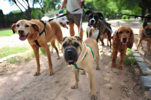 Experience Dog Walker and Professional Animal Sitter!