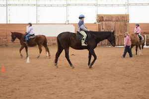 Horses for Part Board Kitchener / Waterloo Kitchener Area image 3