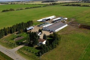 Barrhead Buy And Sell >> Bred Cows | Kijiji: Free Classifieds in Alberta. Find a job, buy a car, find a house or ...