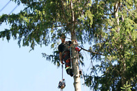 Tree service and removal