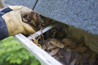 EAVESTROUGH / GUTTER CLEANING! AVERAGE PRICE JUST $90! INSURED!