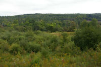 32 beautiful acres, pasture, trees, 4 min Killaloe