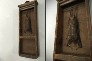 Taxidermy Bat Mounted On Display Shelf