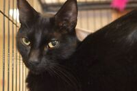 Spook-Oromocto and Area SPCA