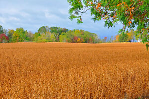 Farm Land:  Top Prices paid for Rent or Share crop