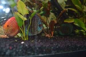 2 discus for sale
