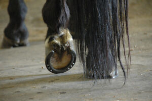 Reliable Farrier service