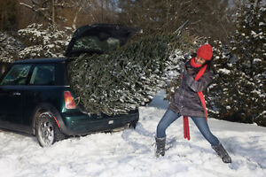 CHRISTMAS TREES FOR SALE. &.DELIVERY North Shore Greater Vancouver Area image 4