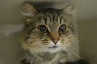 Tasha-Oromocto and Area SPCA
