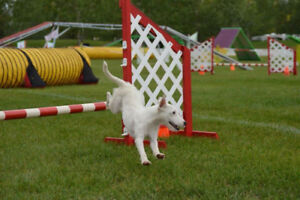 Agility Classes starting at Dynamo!