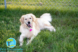 Dog boarding with a difference at Pets Unleashed!