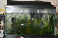 40 Gallon Tank + Accessories + Guppies (50+) = $150 OBO