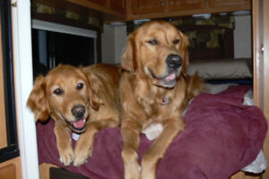 Ready to go!  Dog Care Website For Sale.