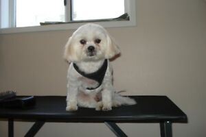 Small Dog Breed Grooming