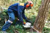 Chainsaw Services