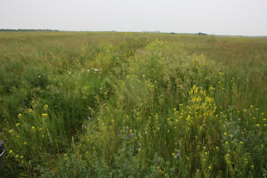 GREAT SASKATCHEWAN PASTURE FOR SALE WITH 6 % LEASE