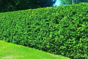 Cedar Hedges Spring Specials!!