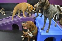 Doggie Daycare at Pooches Playhouse