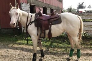 Sweet, Safe and Fancy Quarter Horse Mare For Sale