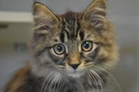 More Kittens-Oromocto and Area SPCA