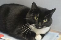Rizzo-Oromocto and Area SPCA