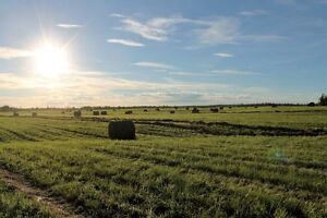 2nd cut Hay for sale