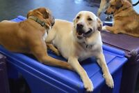 Pooches Playhouse Doggy Daycare