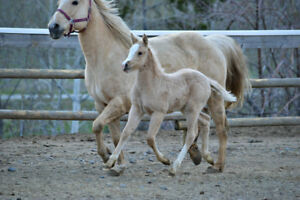 3Winds Ranch Foals For Sale