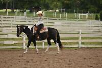 Quality Show and Trail horses for half lease