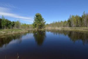 Erablière potentielle de plus de 3300 entailles sur 56 acres
