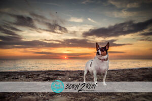 Book your sunset session now!