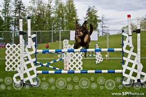 Obedience/Agility Training Classes