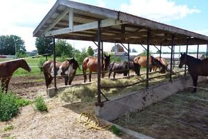 Pension pour cheval au Ranch RJB