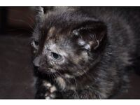 Kittens looking for forever homes.